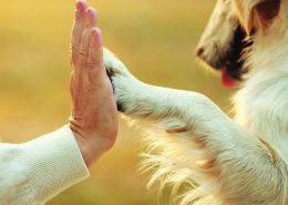 šuns letenų dezinfekavimas