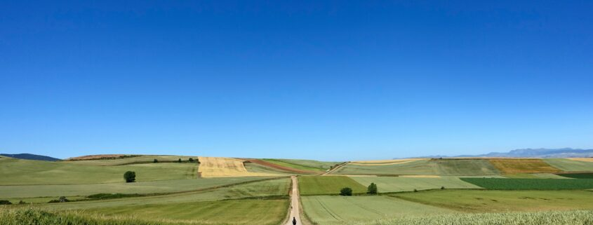 Long dirt road leading to rural farm on a clear sunny day